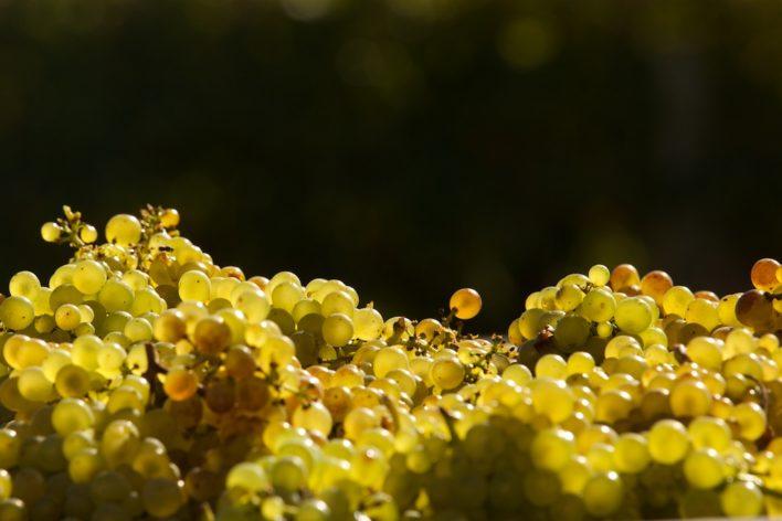 Wine country updates 11