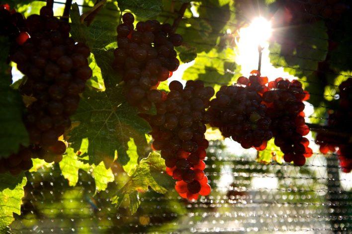 Wine country updates 17