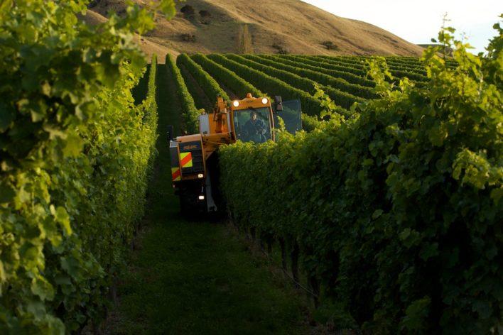 Wine country updates 19