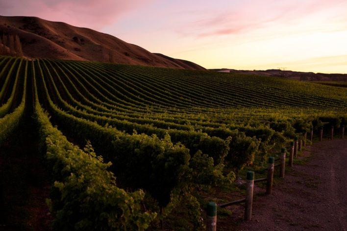 Wine country updates 22