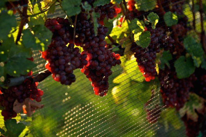 Wine country updates 8